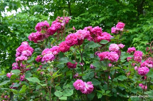 jardin,chez Bernadette,puces,cygnes,pluie 146.JPG