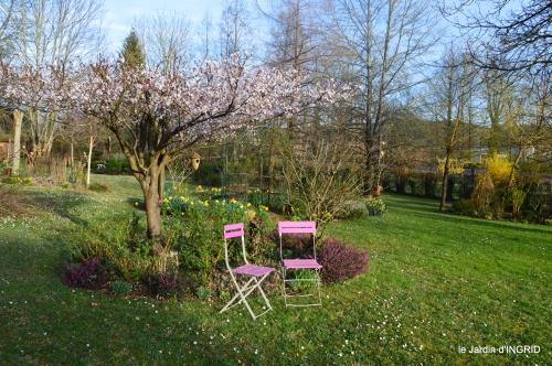 primevères ,jardin 028.JPG