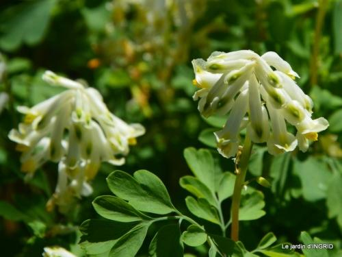 geais,jardin,printemps 095.JPG