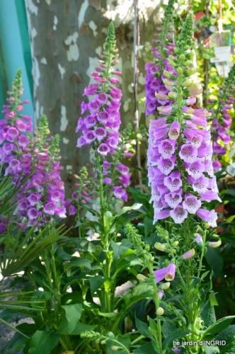muguet,féte des fleurs Lalinde,jardin 100.JPG