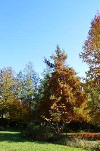 petit érable,le canal et lejardin àl'automne 036.JPG