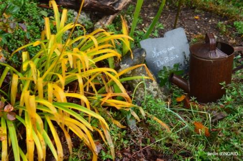 fin de l'automne,Lalinde,bouquet de l'avent 104.JPG