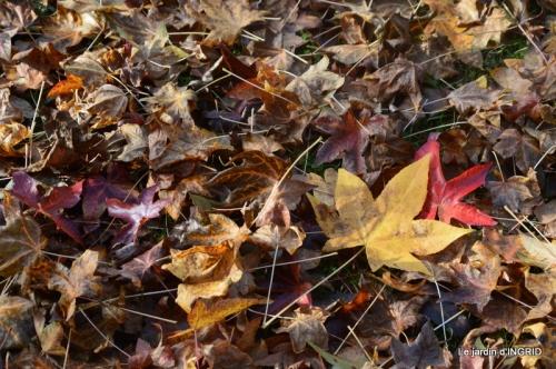 canal,automne,tonte des feuilles 011.JPG