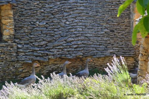 lantanas,pêcheurs,roque st Christophe,cabanes de Breuil,cygnes,p 192.JPG