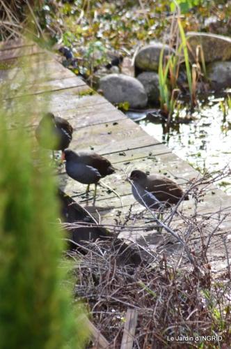 oiseaux SOL 2015 035.JPG
