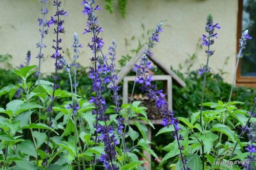 jardin,petit jardin,nénuphard,papillons 019.JPG
