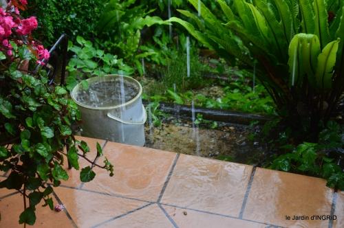 jardin,chez Bernadette,puces,cygnes,pluie 001.JPG