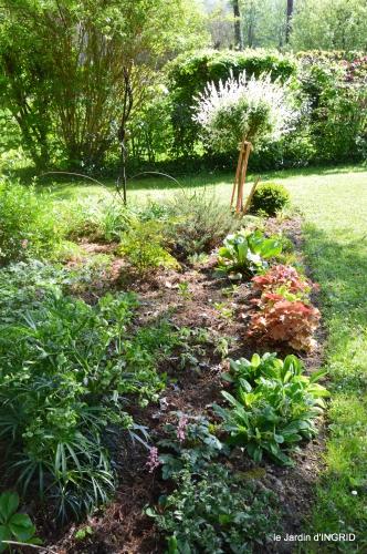 rosier de banks,jardin,cygnes,osier 083.JPG