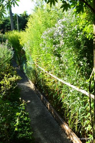 jardin en septembre,les cygnes 051.JPG