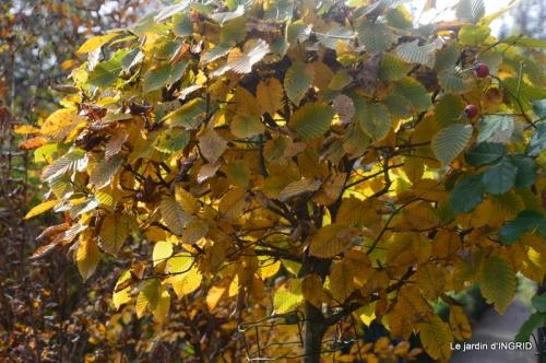 canal,automne,tonte des feuilles 021.JPG