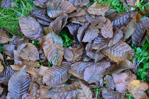 Romefort,bord de Creuse,vent,feuilles,jardin,canal 187.JPG