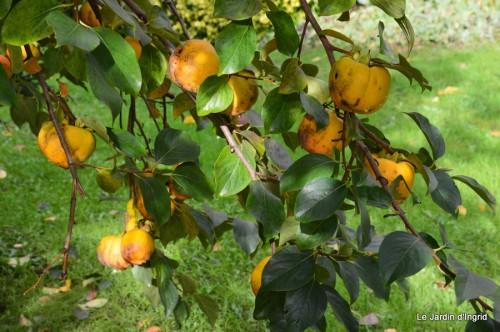 automne,arbres,inondation 110.JPG