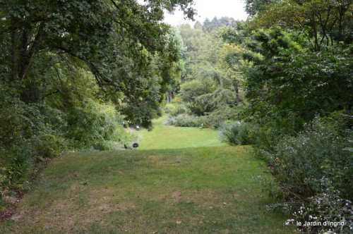 asters,bouquets,jardin de Lilianne 024.JPG