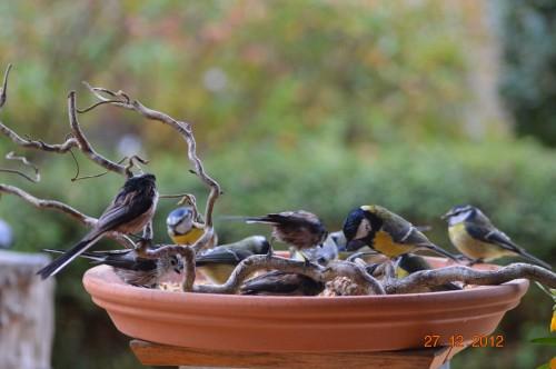 mésanges, nid frelons,fleurs décembre 101.JPG