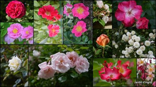 2013-07-02 coeur des fleurs,papillons,libellules.jpg