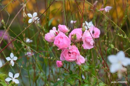 couleurs d'automne,bouquet,lune 009.JPG