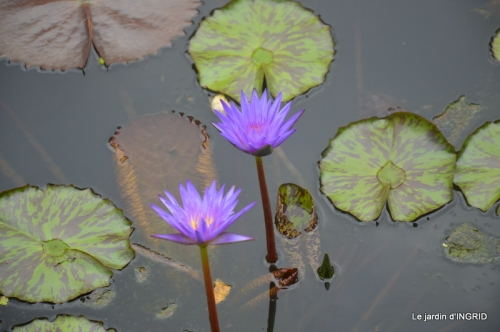 orage,puces,bouquet,Anniv.Ines,Brantome,Jardins d'eau 217.JPG