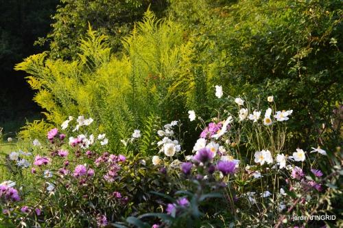 Asters,papillons,Hassina sapin,jardin 179.JPG