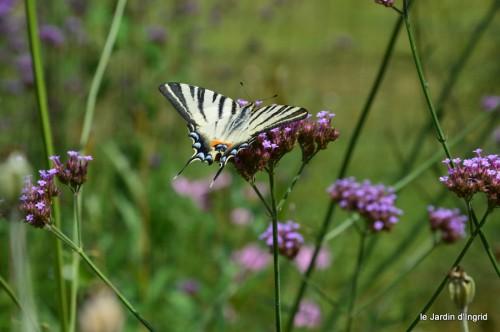 datura,papillon,Meyrals,déco Bergerac,bignonia 035.JPG