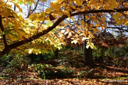 jardin, feuilles,sauges,gloriette,land art 049.JPG