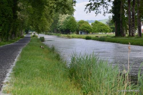 canal,fleurs blanches,marguerites,LE FLEIX,osier 060.JPG