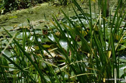 la mare,pt jardin,passiflore,Sophie,le canal,vues jardin 056.JPG