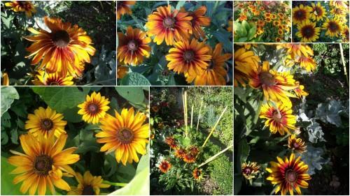 2012-09-06 papillon.jpg