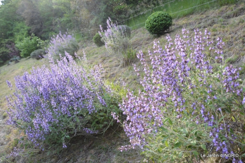 jardin,premières roses,colline,avant l'orage 019.JPG