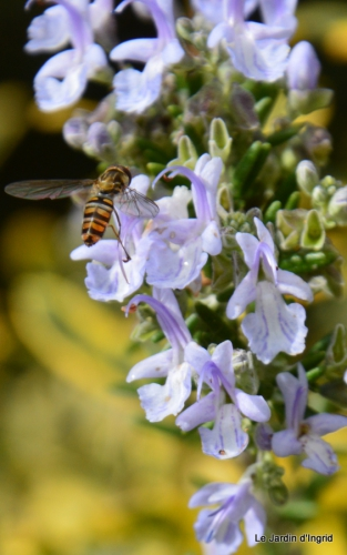 travaux,érable rouge,abeilles,Monpazier,jardin 047.JPG