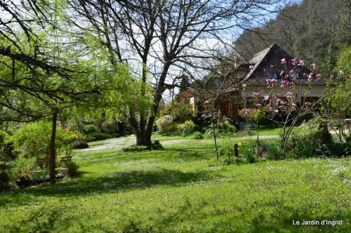 paquerettes,arums,laurier palme,jardin 039.JPG
