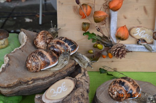 champignons,citrouilles,st Mayme de Péreyrol,fuschias,jardin aut 081.JPG