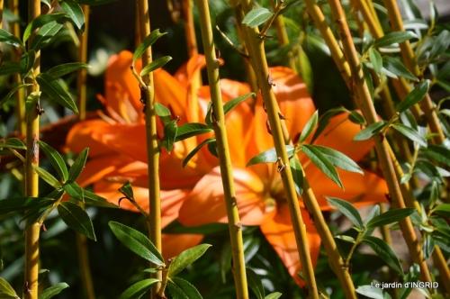 hémérocalles,Doprdogne,canal,bouquet fruit,jardin 058.JPG