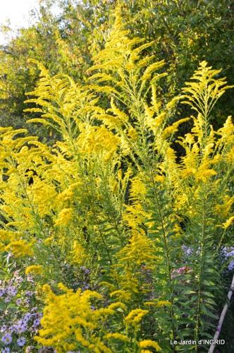 jardin Mme Perichou,grandes fleurs,bouquet,jardin 102.JPG