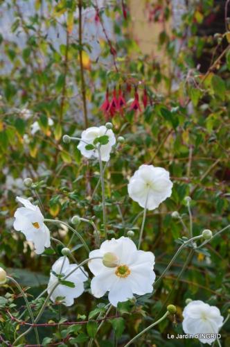 jardin Mme Perichou,grandes fleurs,bouquet,jardin 043.JPG