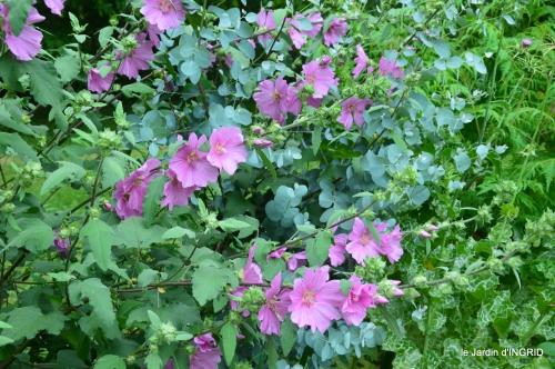 jardin,chez Bernadette,puces,cygnes,pluie 137.JPG