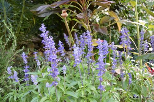 jardin,fruits,Caro,papillons,manthe religieuse,Lalinde 009.JPG