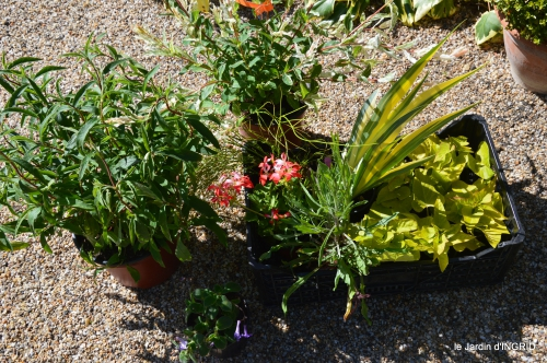 coquelicots,fête des fleurs Lalinde,fouleix,jardinage 167.JPG