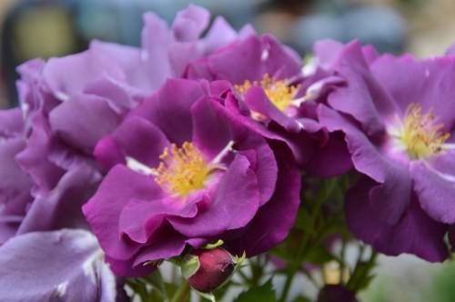CADOUIN,cascade,iris,roses,fl.sauvages 038.JPG