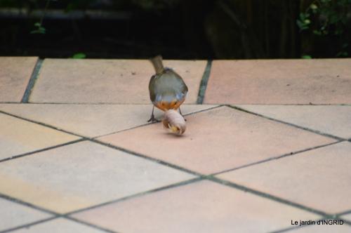 jonquilles,oiseaux avec noix,taille arbres,jardin 050.JPG