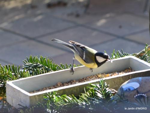 Mompazier,oiseaux,givre 108.JPG