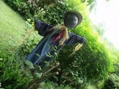 annee 2011 903.JPG