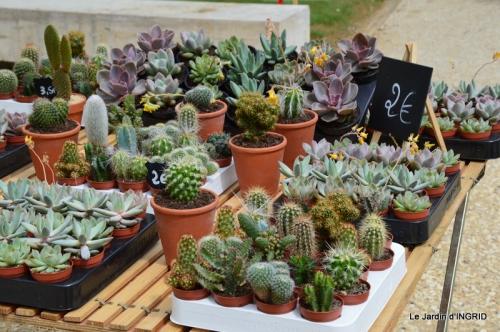 Cadouin,ancolies,roses,pollen,osier,photos Fabien,coquelicots 038.JPG