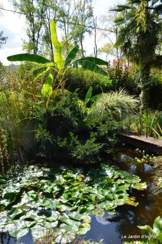 jardin,puces Lasmonzie,asters 089.JPG