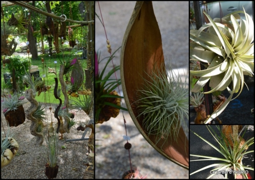 2019-05-01 muguet,féte des fleurs Lalinde,jardin3.jpg