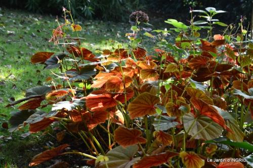 automne, décos cucurbitacées,jardin 014.JPG
