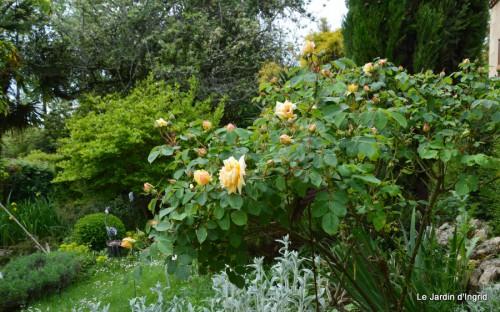 jardin,roses,cabane 066.JPG