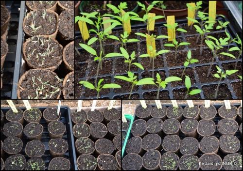 2015-03-28 jardin (3 semaine de mars)1.jpg