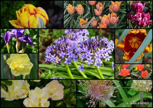 2015-04-17 jardin avril,tulipes pivoine,iris d'eau,chenilles1.jpg