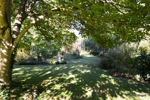jardin,asters,fleurs blanches,chatte,rosiers roses 045.JPG