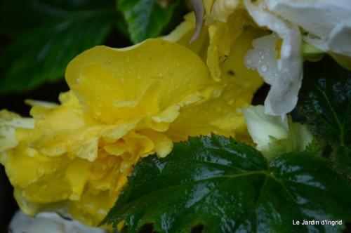mariage,jardin,la Brande,figues 047.JPG